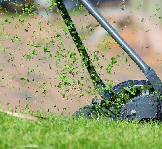 Techniques de semis et d'entretien d'une pelouse