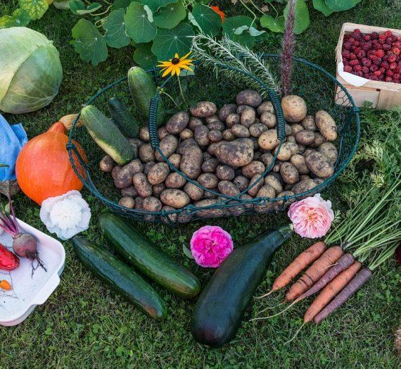 Les légumes faciles à planter et entretenir dans un jardin potager