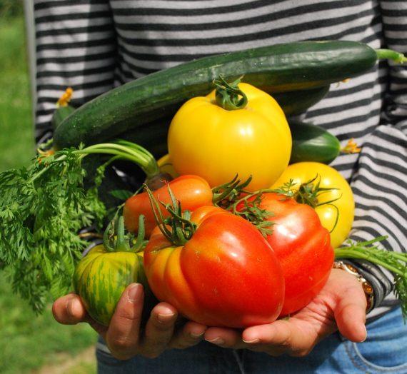 Conseils et astuces pour réaliser sans difficultés un jardin potager